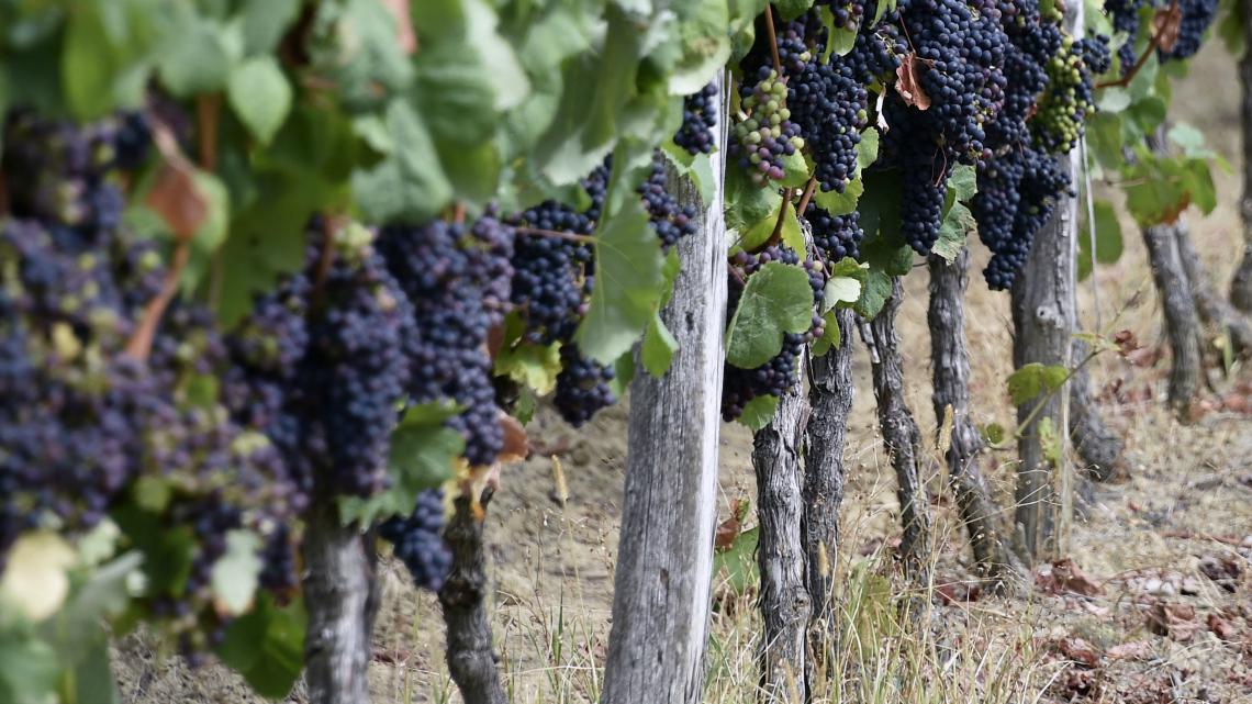 La LEGGE del Vino