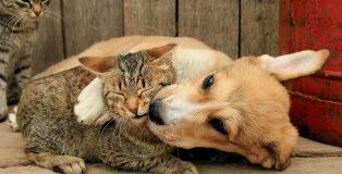 Immagine gatto diffidente con cane affettuoso