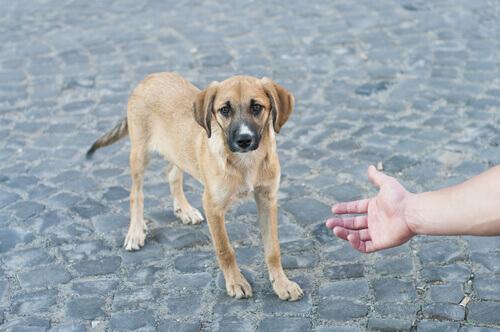 Come comportarsi quando si trova un cane per strada?