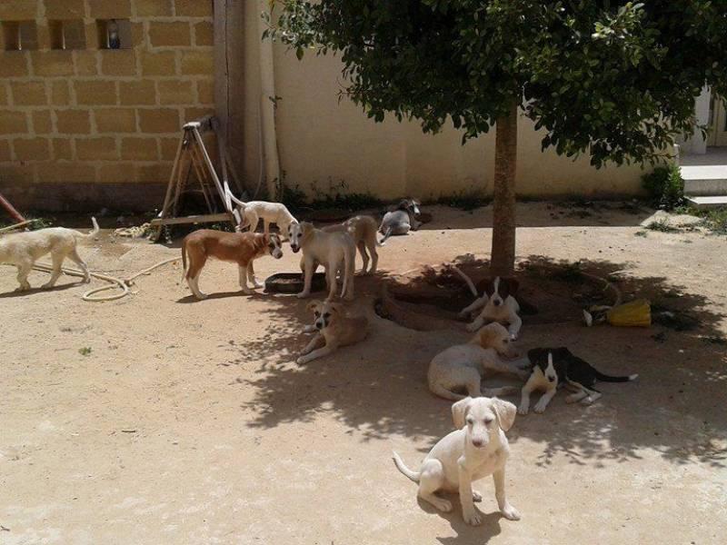 LO STUDIO: In calo i cani nei canili, ma cresce il randagismo nel sud Italia