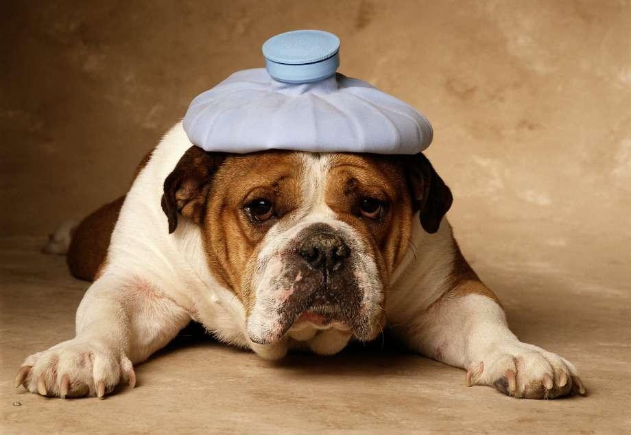 LEGGI&DIRITTI: permesso dal lavoro per curare il cane malato