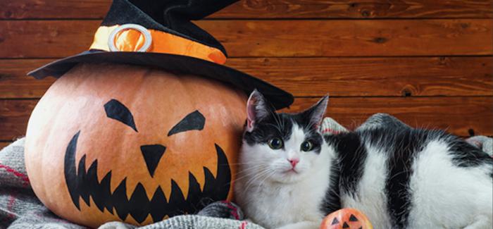 """Halloween: ai cani e ai gatti non piace il """"dolcetto o scherzetto"""""""