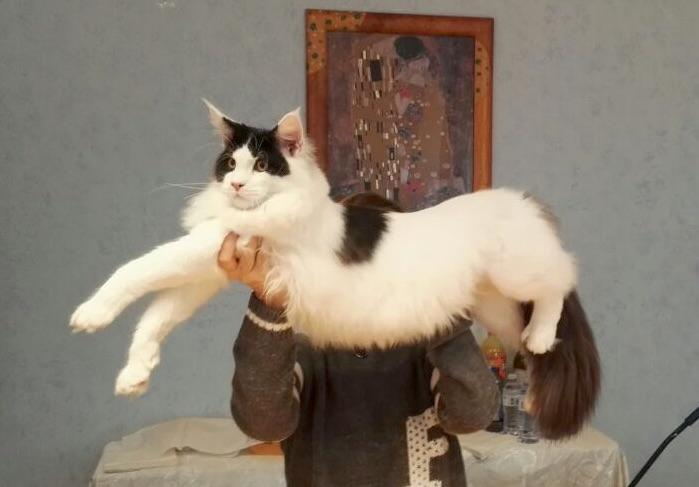 STAR CATS, in Fiera arrivano i gatti!