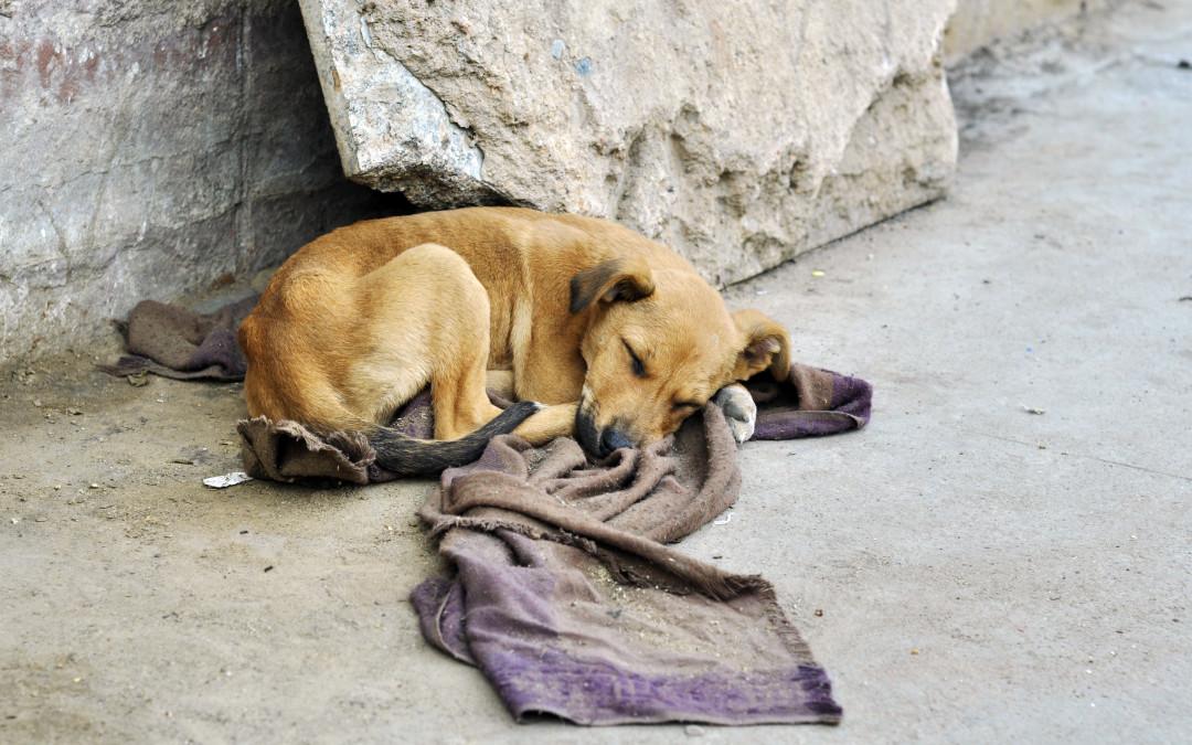 La statistica: in Italia ogni tre minuti si abbandona un animale