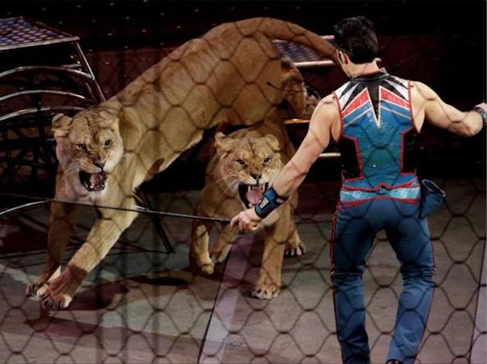 Stop animali nei Circhi: OK dal Parlamento
