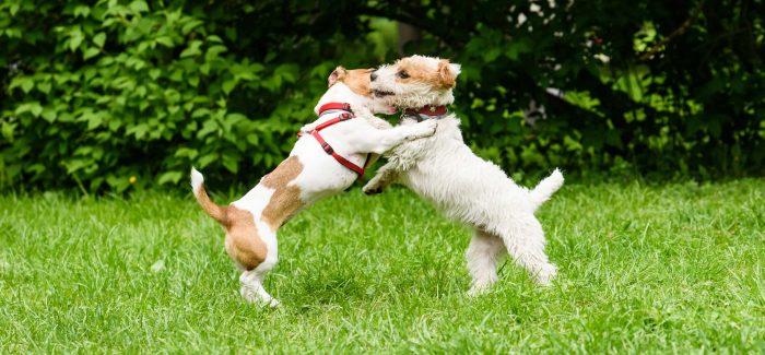 Il nostro cane e il MONDO che lo circonda