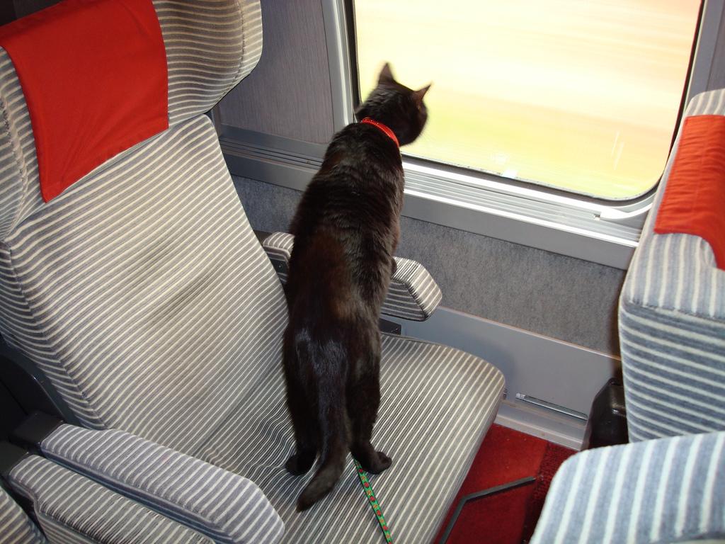 In treno con FIDO