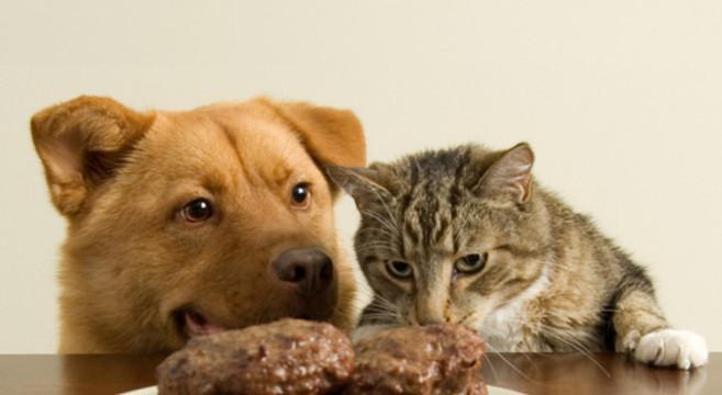 Cibo per cani e gatti tassato come i beni di lusso