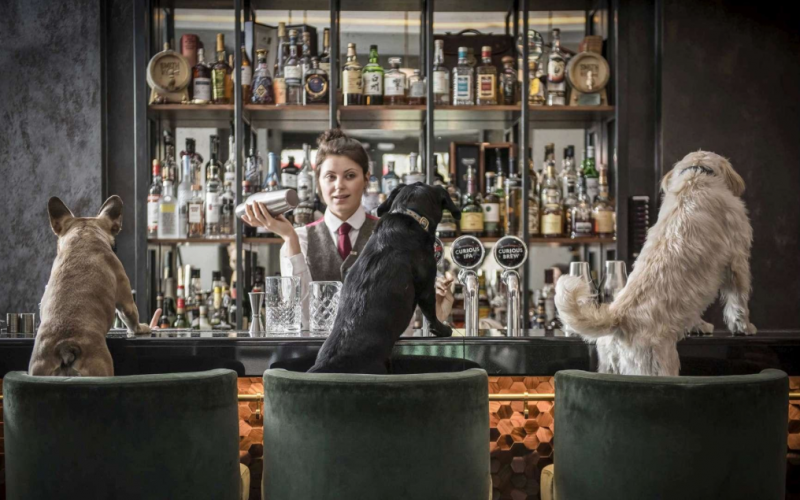CURIOSITA': A LONDRA C'E' UN HOTEL CHE SERVE COCKTAIL… DA CANI!