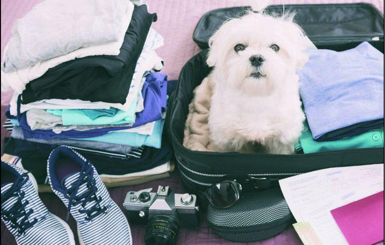 Cani e gatti in valigia:  viaggiare con loro senza problemi