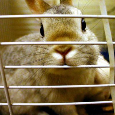 LA CAMPAGNA: FUORI DALLE GABBIE GLI ANIMALI