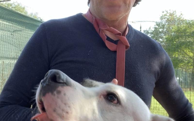 La triste storia dei Dogo Argentini di Castelnovo di Sotto