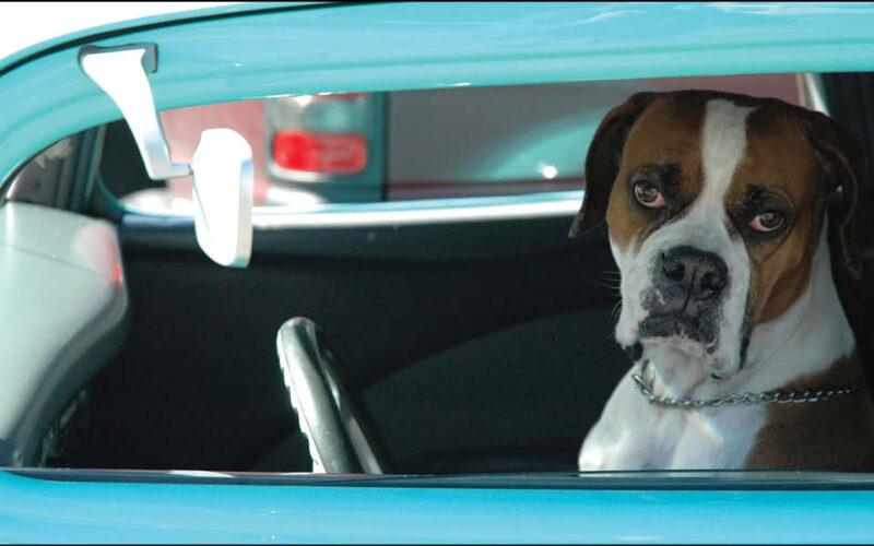Colpo di calore. Non scordate il cane in macchina