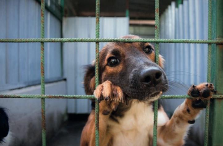 Liberatemi… dalle speculazioni – Storia di un cane randagio
