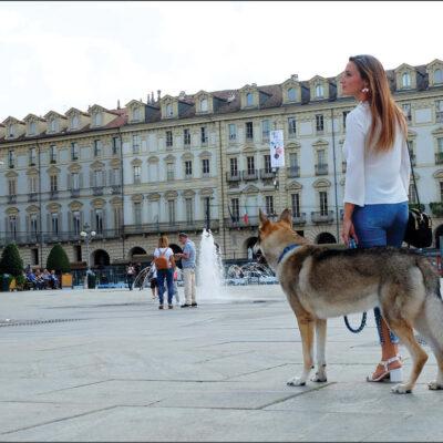 Cane urbano – Consigli per accompagnare i cuccioli a scoprire il mondo!