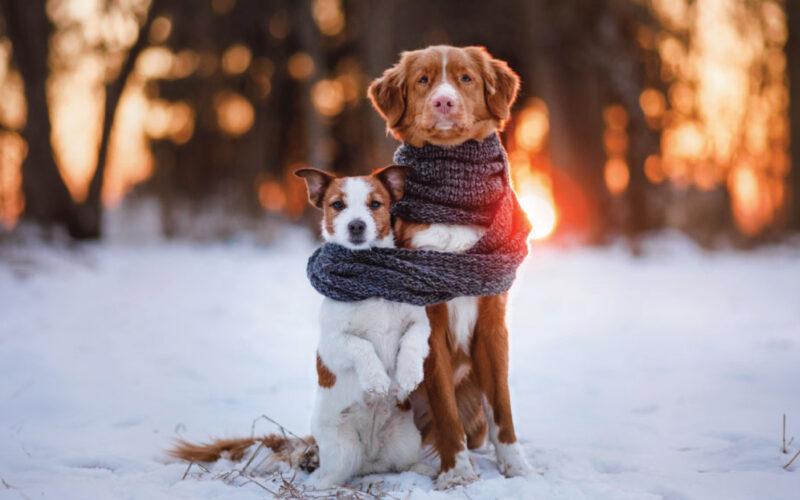 "Sta arrivando un  ""freddo cane"""