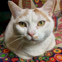 Mina 8 anni un amore di gatta