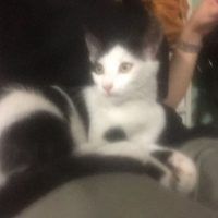 Gattina trovata x strada a Montecchio