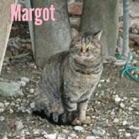 Margot cerca casa!